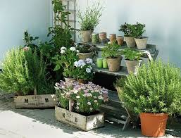 apartment herb garden. Plain Garden Grow More Than Just Herbs Urban Herb Garden With Apartment Herb Garden I