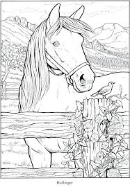 Advanced Printable Horse Coloring Pages Stephaniedlcom