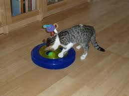 Cheese <b>Chase</b> 3-in-1 <b>Cat Toy</b> | Pets At Home