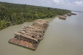 Australia Might Water Down Illegal Logging Laws Heres Why Its A