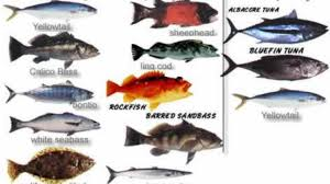 California Rockfish Chart Southern Ca Seasonal Fish Target Chart Fish Species