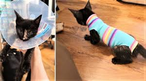 kitten sock onesie diy craft for your furbabies after spay neuter day