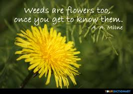Flower Quotes Extraordinary Flowers Quotes Quotes About Flowers YourDictionary