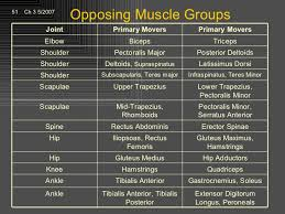 Kinesiology Muscle Chart Afaa Pft Anatomy And Kinesiology