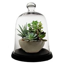 glass cloches bell jars