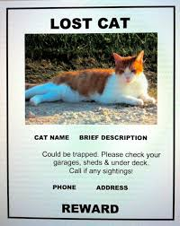 Lost Cat Flyer Face Low Cost Animal Clinichelp I Found A Stray Cat Face