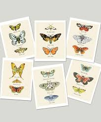 Moth Identification Chart Moth Cards Moth Chart Notecards Naturalist Card Set Insect Moth Identification Entomology Science Lepidoptery