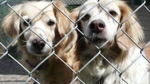 persuasive essay on animal cruelty co animal abuse essays engineering essay sample persuasive