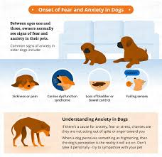 helping dogs with anxiety. Unique With Treating Dog Anxiety Can Be A Frustrating Seemingly Noendinsight  Process Letu0027s Look At Some Of The Most Common Kinds Symptoms In Dogs  To Helping Dogs With Anxiety N
