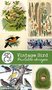 Includes images of baby animals, flowers, rain showers, and more. Remodelaholic 25 Free Vintage Bird Printable Images