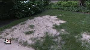 Flint Rebids Lawn And Sidewalk Restoration Contract Causing