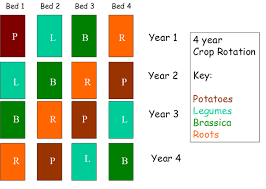 Crop Rotation Chart Vegetable Gardening How To Plan Crop Rotation In A Vegetable Garden