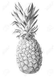 pineapple drawing. full size of coloring pages:charming pineapple page source f11 pages dazzling drawing