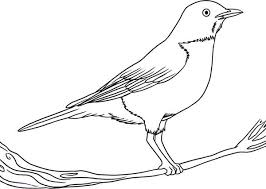 Small Picture robin bird coloring page bird american robin coloring page