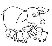 baby piglet drawings. Simple Piglet Baby Pigs And Mother To Piglet Drawings