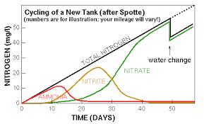 Beginner Faq The Nitrogen Cycle