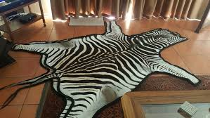 details about authentic south african zebra skin rug hide trophy grade new