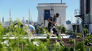 green roofs may soon be required on all