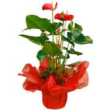 Resultado de imagen para regalando plantitas