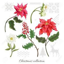 Poinsettia Designs Set Of Elements Of Poinsettia Flowers Berries Hellebore And