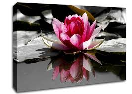 stretched pink canvas wall art beautiful pink water lily reflection flowers fresh natures pictures photography large on canvas wall art pink flowers with wall art adorable galleries about pink canvas wall art pink artwork