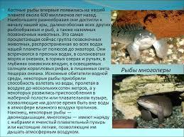Реферат Надкласс рыбы ru Надкласс рыбы