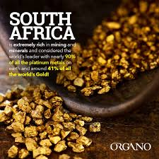 This flavourful organo™ coffee also contains ganoderma mushroom which provides a hint of nutty flavour to balance the rich, bold and smooth flavour of this coffee. Organo Gold Makati Organomakati Twitter