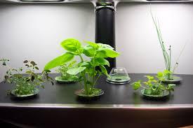 Kitchen Window Herb Garden Kit Growing Herbs From Seeds Herb Gardening Help Growing Herbs From