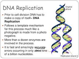 dna structure and replication essay dna replication essays  dna structure and replication essay dna replication essays and papers edu essay