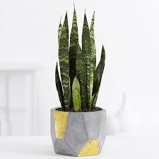 office indoor plants. Office Plants Indoor