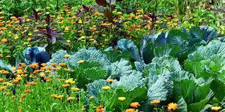 companion planting for organic garden pest control