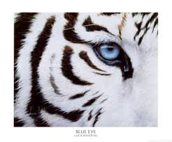 bluest eye essays the bluest eye essays