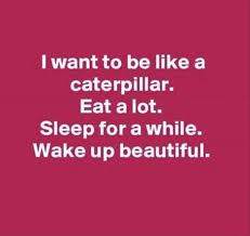 Stupid Yet Funny Quotes And Sayings Caterpillar Wattpad