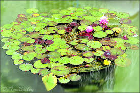 garden pond supplies. Shop Online To Buy Pond Equipment And Supplies Including Kits, Filters, Pumps. Garden T