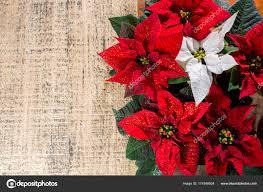Weihnachten Sterne Weihnachtsstern Von Roten Und Weißen