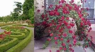 Small Picture Rose Garden Ideas Pictures Native Garden Design