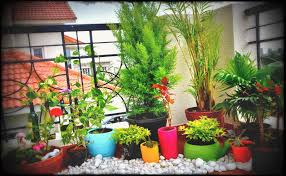 office gardening. Astonishing Balcony Gardening In Small Spaces At Decorating Room Office Design Pleasant New Charming Wall Ideas G