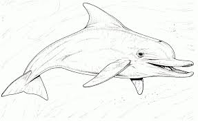 Awesome Dolphin Coloring Pages Pdf To Color At Coloring Page