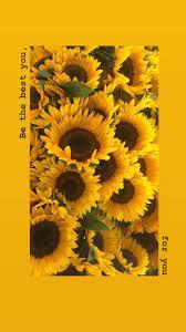 Sunflower Yellow Tumblr Aesthetic ...