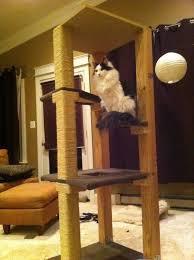 cat stand imgur