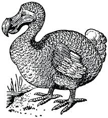 Realistic Bird Coloring Pages Realistic Bird Coloring Pages