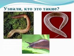Доклад на тему Животные в почве скачать презентацию Описание слайда