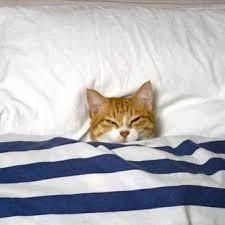 Всем спать: <b>постельное белье</b> - Posts | Facebook