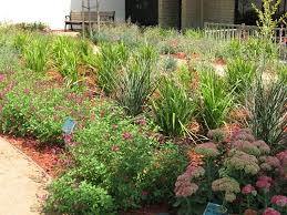 Small Picture Drought Tolerant Landscaping City of Glendora