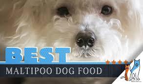 Beneful Healthy Puppy Feeding Chart 11 Best Maltipoo Dog Foods With Top Puppy Senior Brands