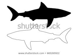 Shark Outline Free Vector Art 16 Free Downloads