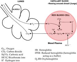 Hemoglobin To Hematocrit Conversion Chart Hemoglobin And Its Measurement