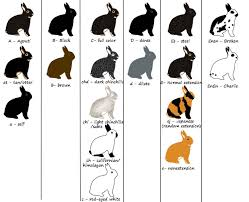 Mini Lop Colour Chart Youve Come To The Right Place This Site Will Provide Basic