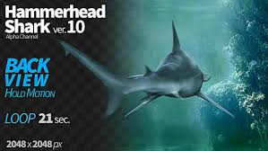 hammerhead shark back view by cglight videohive play preview video