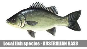 Fish Species Information Guide Melbourne Victoria
